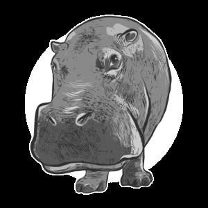 Nilpferd Hippo lustiges Tier Savanne lachen Humor