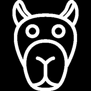 Kamel / Dromedar