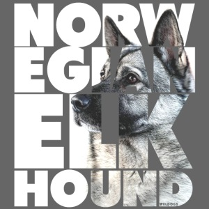 Norwegian Elkhound I