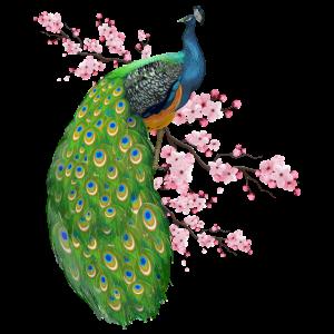 Blumen Pfau