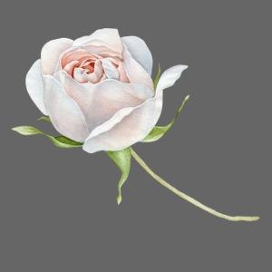 White Rose Watercolor