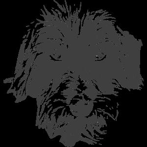Rauhaardackel Dackel Charakterhunde