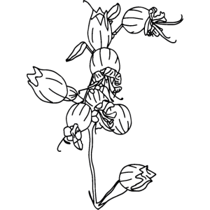 Bergblume Allgäu