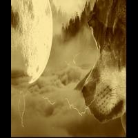 Wolf Wölfe Vollmand Nebel Fantasie