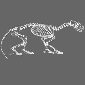 Skeleton little Cat