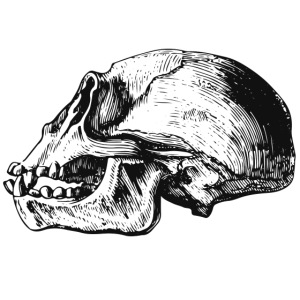 Skull Chimp