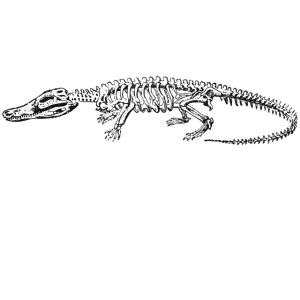 Skeleton Crocodile