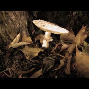Magischer Pilz
