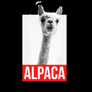 Alpaca Schwarz Weiß