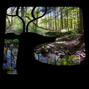 Waldbewohner Wald Fotografie