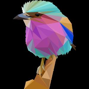 Bunter Vogel Gabelracke Eisvogel
