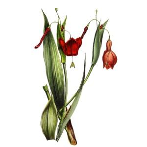 Red Nostalgic Flower