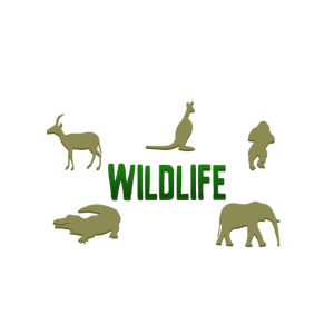 Wildlife nature - Wildleben Natur