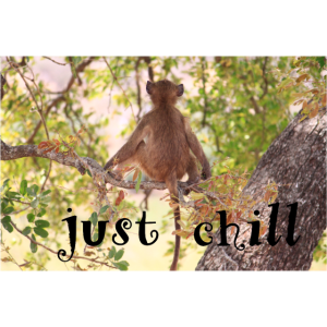 Just Chill Affe