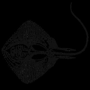 Skelett Rochen