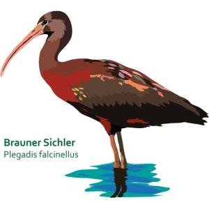 Brauner Sichler