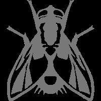 fliegen Insekten fliegen 1112