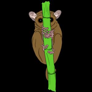 Koboldmaki mit großen Augen Geschenkidee für Affen