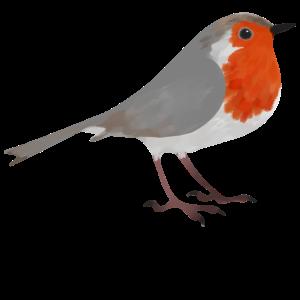 Vogel Rotkehlchen