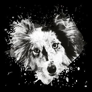 Border Collie Hund 5 Portrait wsbw