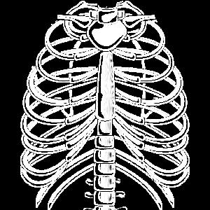 Skelett Halloween Rippen und Brustkorb