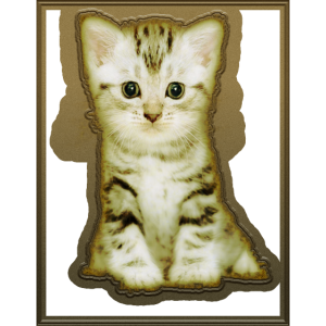 Ich liebe Katze Katzenauge Katzenbaby