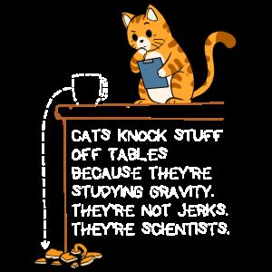 Wissenschaft Wissenschaftler Katze Physik