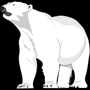 Polarbär Eisbär Nordpol