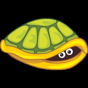 Lustiges ängstliches Schildkrötenfell