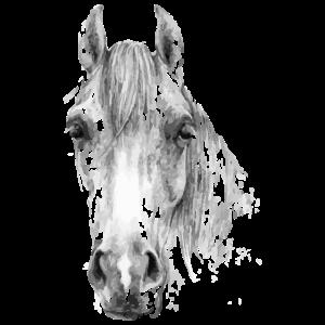 Pferd Pferdekopf Reiten