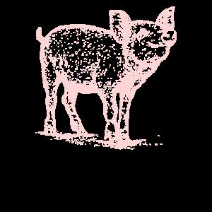 Schwein, Schweinchen, schweine, Hausschwein, Farmt