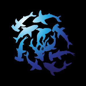 Überall Haie