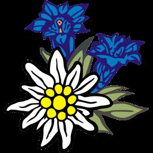 edelweiss_mit_enzian