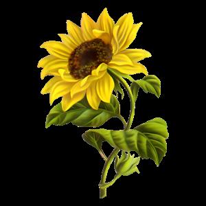 Schoene Sonnenblumenpflanze Blumenkunstwerk