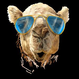 Kamel mit Sonnenbrille