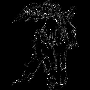Fjordpferd, Norweger, Pony