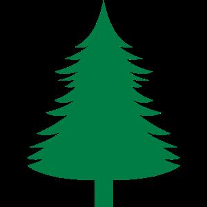 Fichte, Tanne, Wald1