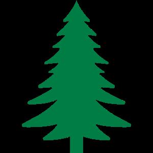Fichte, Tanne, Wald
