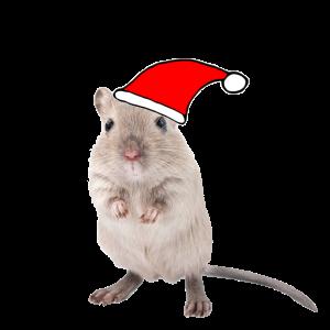 Rennmaus mit Weihnachtsmütze