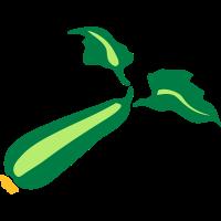 zucchini gemuese 611