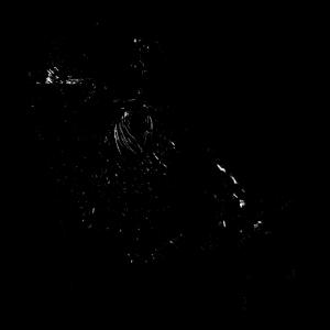 süßer otter mit pfoten in schwarz weiß