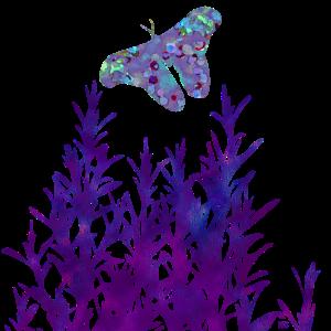 Lila Minze Schmetterling