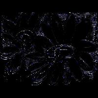 Sonnenblumen schwarz