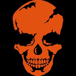 schaedel skelett 9104