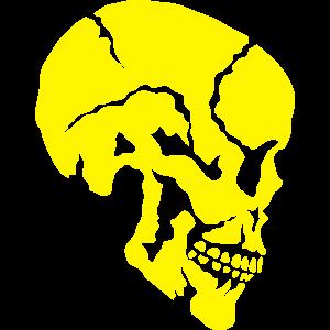 schaedel skelett profil 912