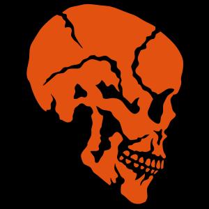 schaedel skelett profil 910