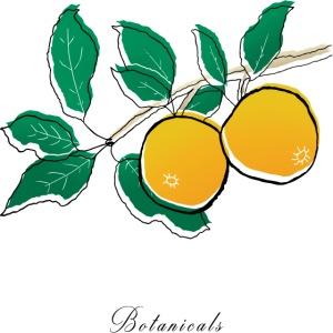 Disegno pianta di arance
