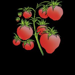 Erdbeerpflanzen-Design
