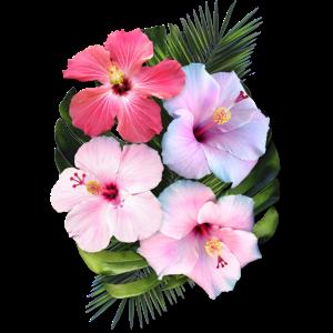 AD Hibiscus