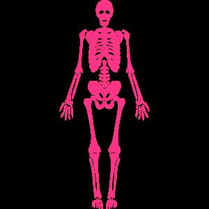menschliches skelett schaedel